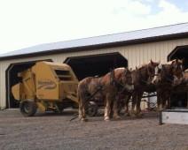 moriahs farm horses