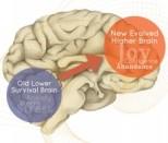 higher brain living