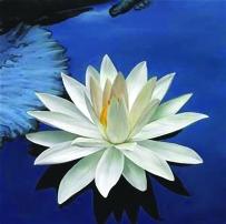 lotus-good