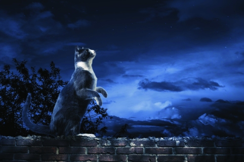 12783034 - photo of a cat looking at the sky