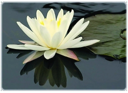 EB_InnerLight_lotus-flower_0317