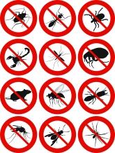 BugsInsectsEliminate_25739223.jpg